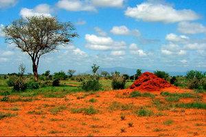 tsavo rouge
